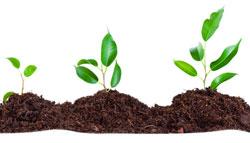 Organic Growth - plants
